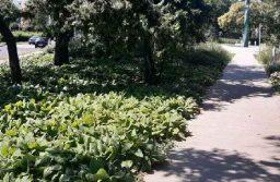 Hogyan újuljon meg a Lisznyai park? Segítsen Ön is a döntésben!